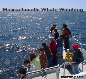 Massachusetts Whale Watching