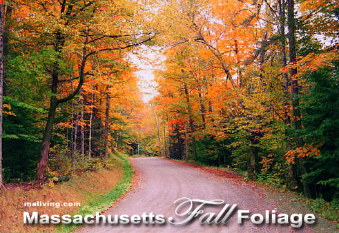 Massachusetts Fall Foliage