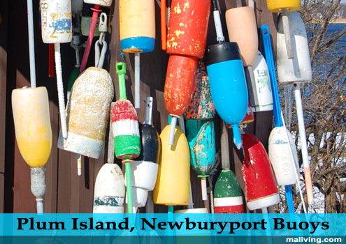 Massachusets - North of Boston - Plum Island, Newburyport Buoys