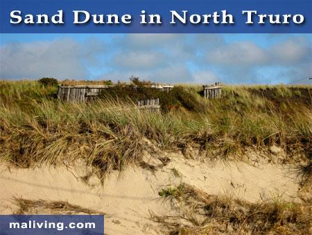 Sand Dune in Truro, MA