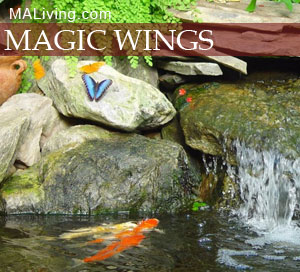 Magic Wings Butterfly Conservatory Berkshire MA Deerfield MA attraction