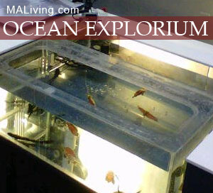 Ocean Explorium New Bedford Mass